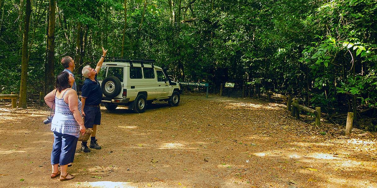 Cairns to Darwin Savannah Way Tour